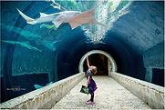 BMP National Sawfish Day Image.jpg