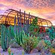 Desert-Discovery-Trail_Desert-Botanical-