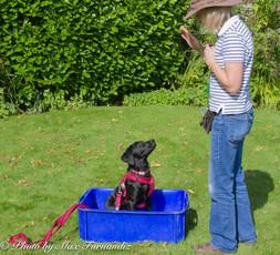 Puppy Class 27 August 2016-3200.jpg
