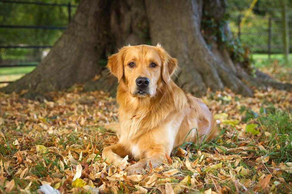 Dogs Autumn-6471.jpg