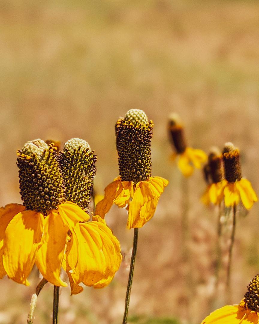 CO Flowers.jpg