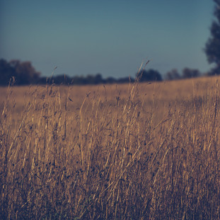 Grass Field Afton 1