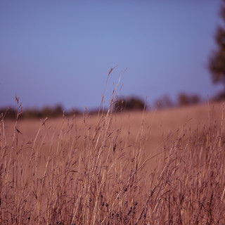 Grass Field 2 landscape