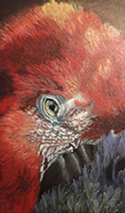 parrot s.jpg