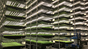 AeroFarms. A maior fazenda vertical do mundo instalada nos EUA.