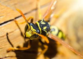 RIDIT Pest Control
