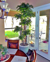 silk-clouded-ficus-tree-in-dining-room