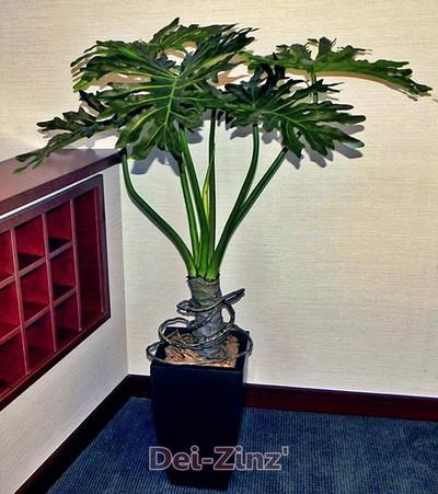 fake-philodendron-selloum-plant