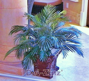 poolside-artificial-phoenix-palm