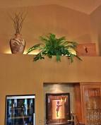 ledge-with-silk-phoenix-palm-house-plant