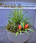 BIG-2-outdoor-faux-grass-with-bromeliads