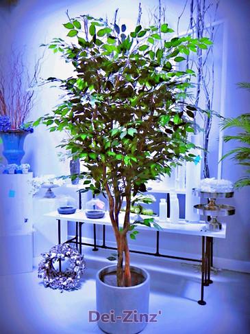 fake ficus tree in Scottsdale showroom