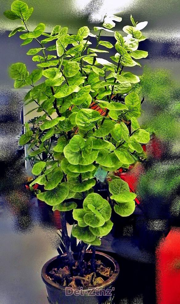 7-foot-artificial-sea-grape-plant