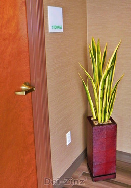 Hotel-faux-variegated-sanseveria