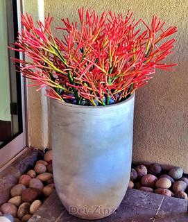 artificial firestick euphorbia