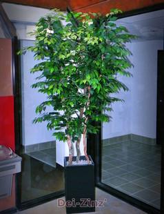 silk ficus benjamina tree