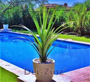 Artificial-sotol-succulent-poolside