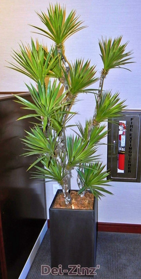faux-yucca-tree-as-office-decor