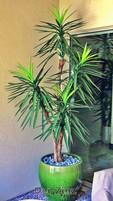 artificial soft-leaf yucca