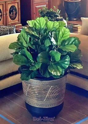 silk-compact-fiddle-leaf-fig-plant