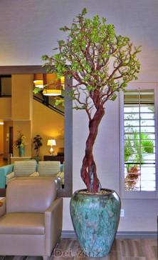 Holiday-Inn-manzanita-tree