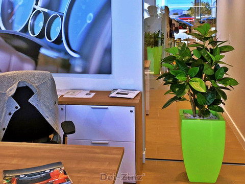 silk-rubber-plant-in-office-window-for-safety