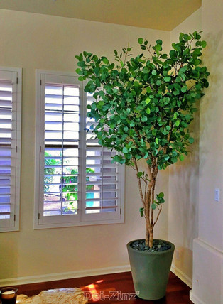 silk-eucalyptus-tree-by-window