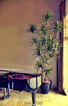 large-faux-marginata-in-piano-room
