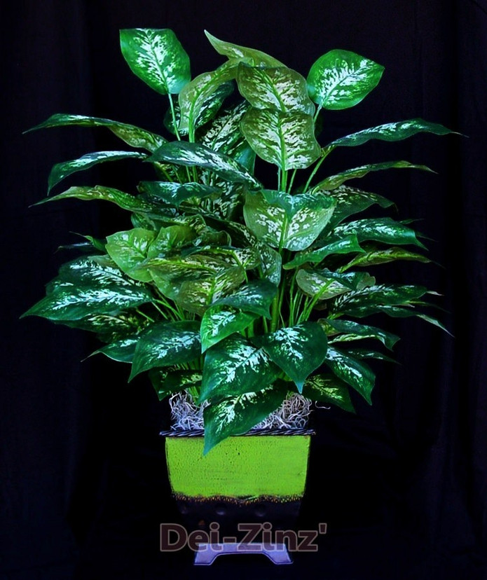 lush-silk-dieffenbachia-plant