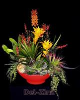 artificial succulent garden with bromeliads
