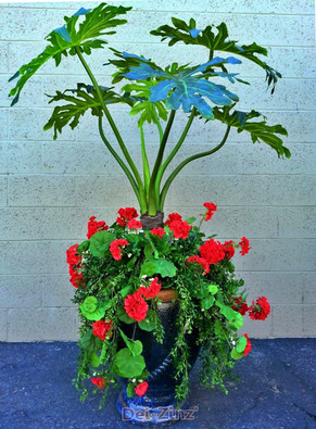 faux-philodendron-plant-with-geraniums-and-greenery