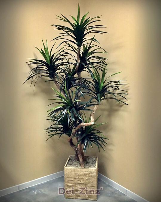 silk dracaena marginata small tree