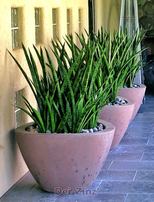 faux green sanseveria in patio planters