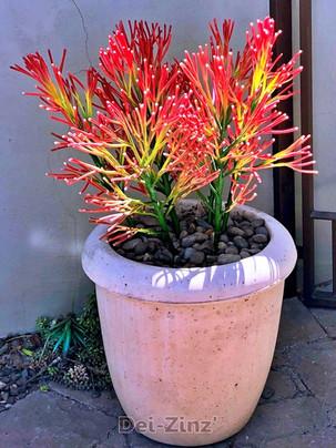 artificial firestick pencil cactus