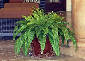 indoor-pool-room-silk-boston-fern-plant