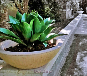 artificial agave attenuata