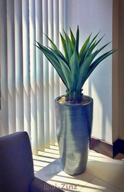 Bank lobby realistic agave in bullet planter