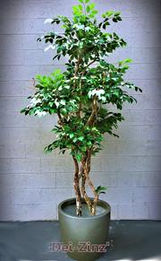 small-silk-ficus-tree