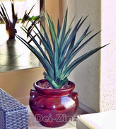 artificial spiked agave succulent