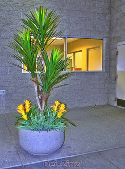 auto-dealer-yucca-on-dragonwood-with-bromeliads