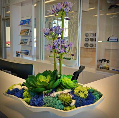 agapanthus succulent moss arrangement