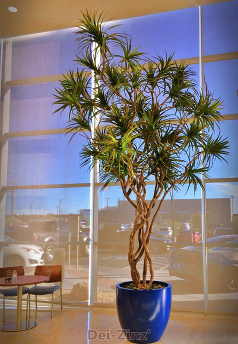 commrcial 16-foot silk marginata tree