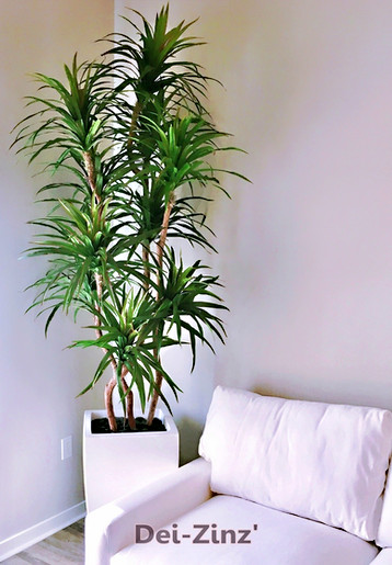 silk marginata tree in white fiberglass container