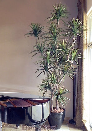 11-foot-silk-dracaena-marginata-tree_edi