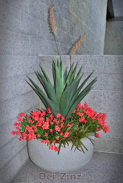 BIG-2-artificial-flowering-outdoor-agave