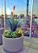 artificial-succulent-plants-at-Big-2
