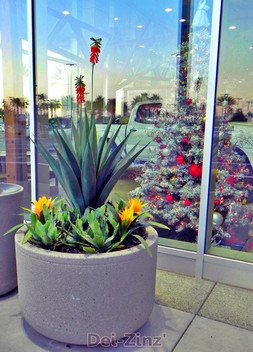artificial-succulent-plants-at-Big-2
