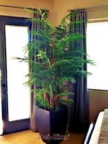 silk-areca-palm-tree-with-banana-stalks