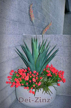 blue-green artificial blooming agave