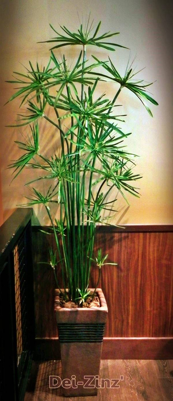faux-cypress-grass-plant-in-square-planter